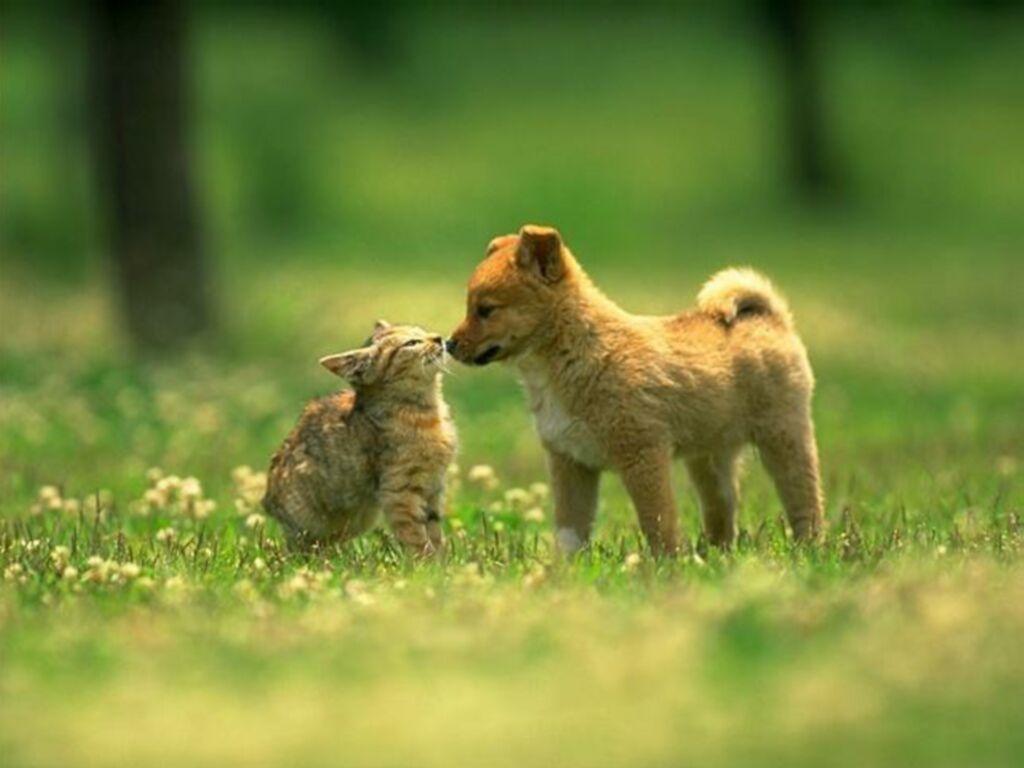 Dog & cat time (hora del perro y el gato)